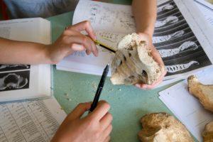 Students examine bones