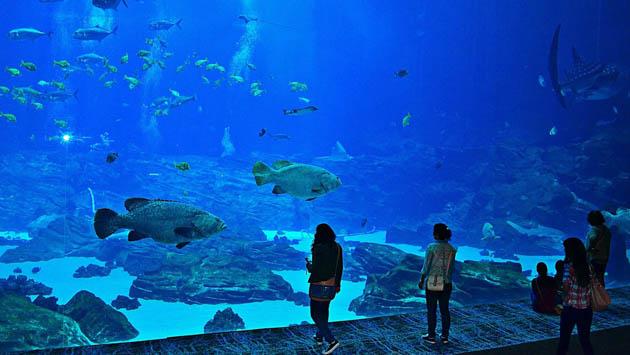 Students at an aquarium